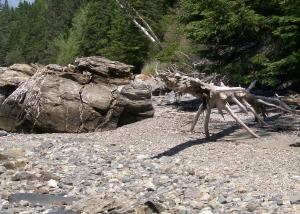 tree withh rock