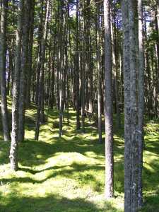 woods return