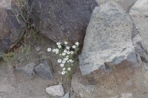 473 flower