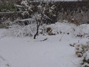 snowfall682