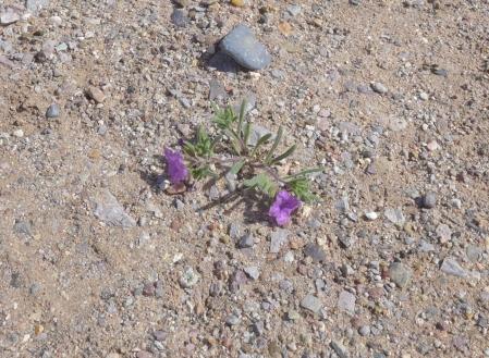 purple mat0119