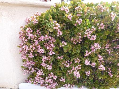 Front bush10233