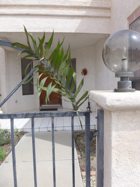 palm0234